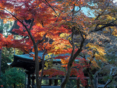 Autumn leaves: Engaku-ji