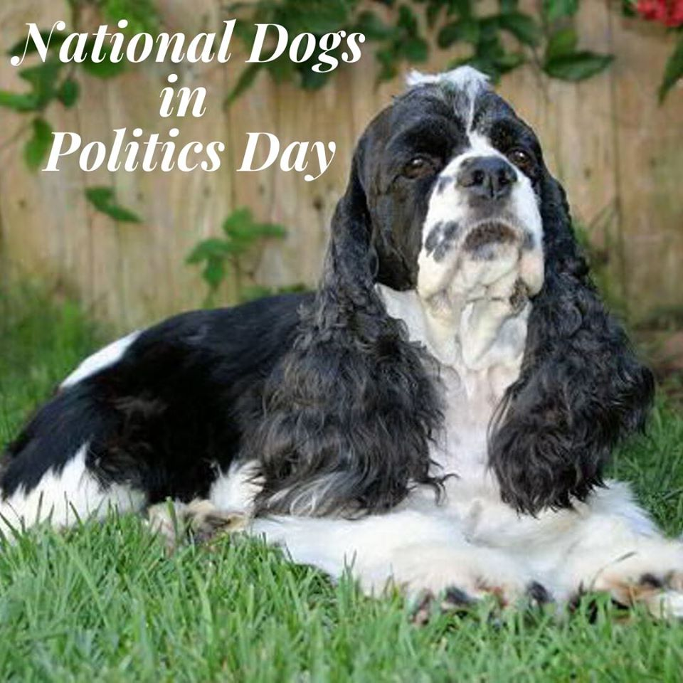 National Dogs in Politics Day Wishes For Facebook