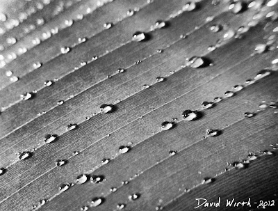 Macro Leaf water droplets