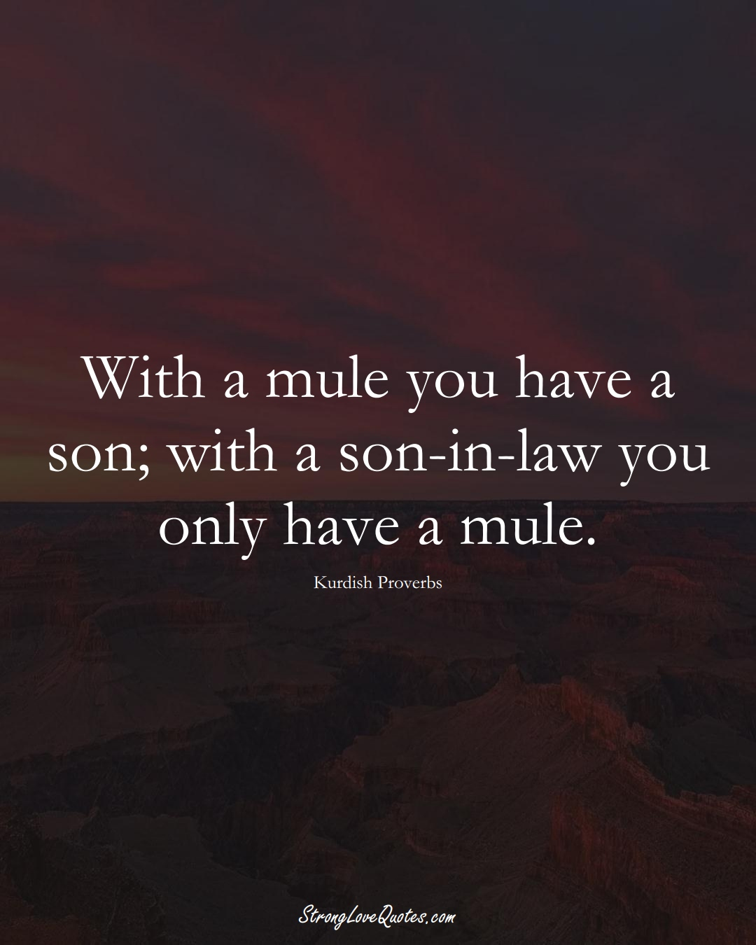 With a mule you have a son; with a son-in-law you only have a mule. (Kurdish Sayings);  #aVarietyofCulturesSayings