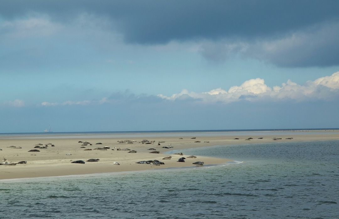 seehundbank-cuxhaven