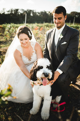 bride, groom and cute dog