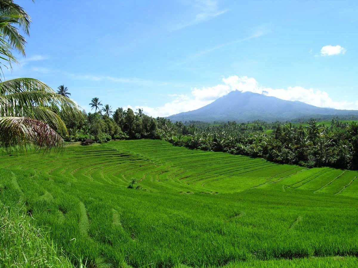 Contoh Geguritan Bahasa Jawa Dengan Tema Kesehatan