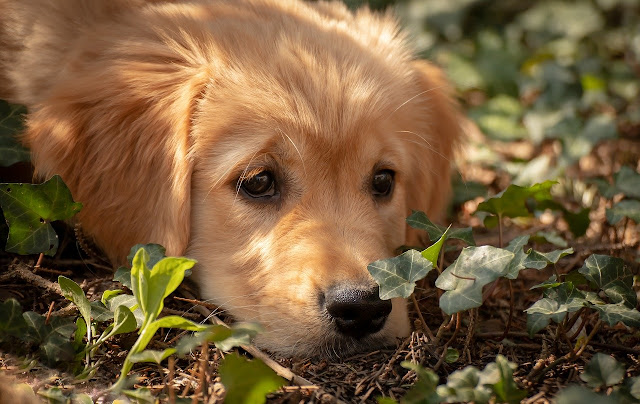 Cute puppy wallpaper for computer