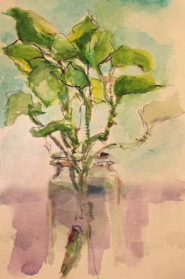 watercolor of ivy in glass jar with ballpoint ink outlines