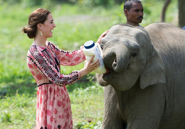 Duke and Duchess of Cambridge visits Kaziranga National Park which was built by animals protection foundation that was founded by Mark Shand