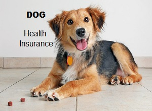 Dog Health Insurance for Your Pet