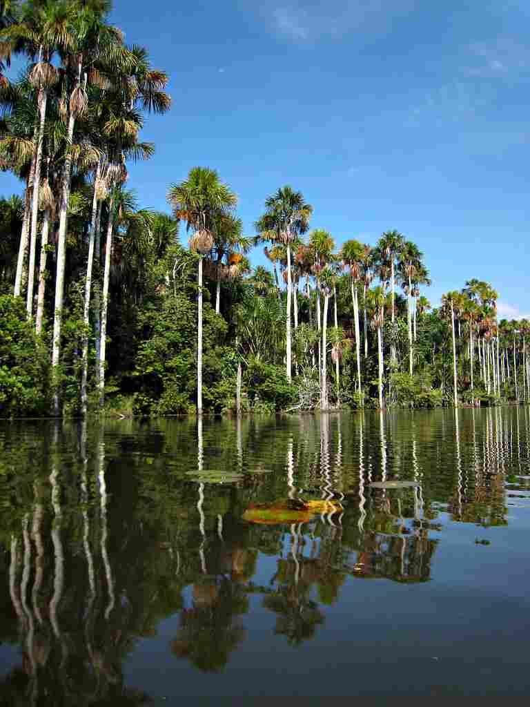 7 Things to do in Peru, Peru, peru brazil, peru machu picchu, peru capital, peru time, peru in which country, machu picchu, machu picchu peru,machu picchu of peru, machu picchu 7 wonders of the world, machu picchu is located, machu picchu which country, machu picchu is in which country, machu picchu located in which country, lake sandoval, lake sandoval lodge
