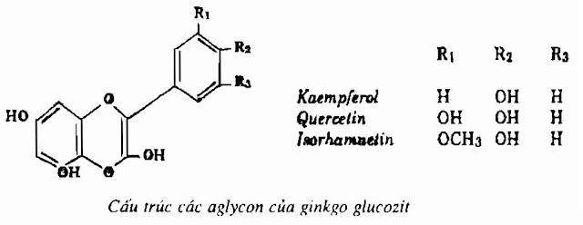 Thành phần hóa học BẠCH QUẢ - Ginkgo biloba - Nguyên liệu làm thuốc Chữa Ho Hen