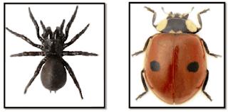 laba laba dan kumbang www.simplenews.me