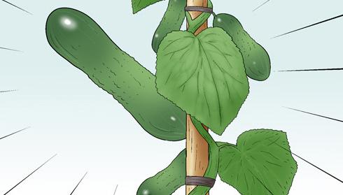 Kim Chi & Củ Cải (bộ mới) phần 394: Cây dưa chuột