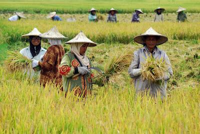 Image result for kondisi pertanian di indonesia