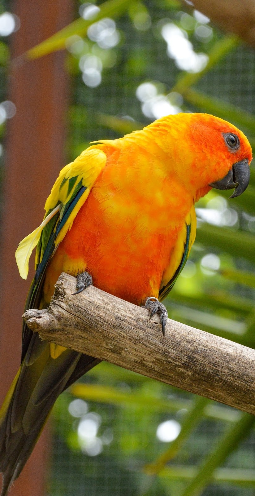 Colorful conure.