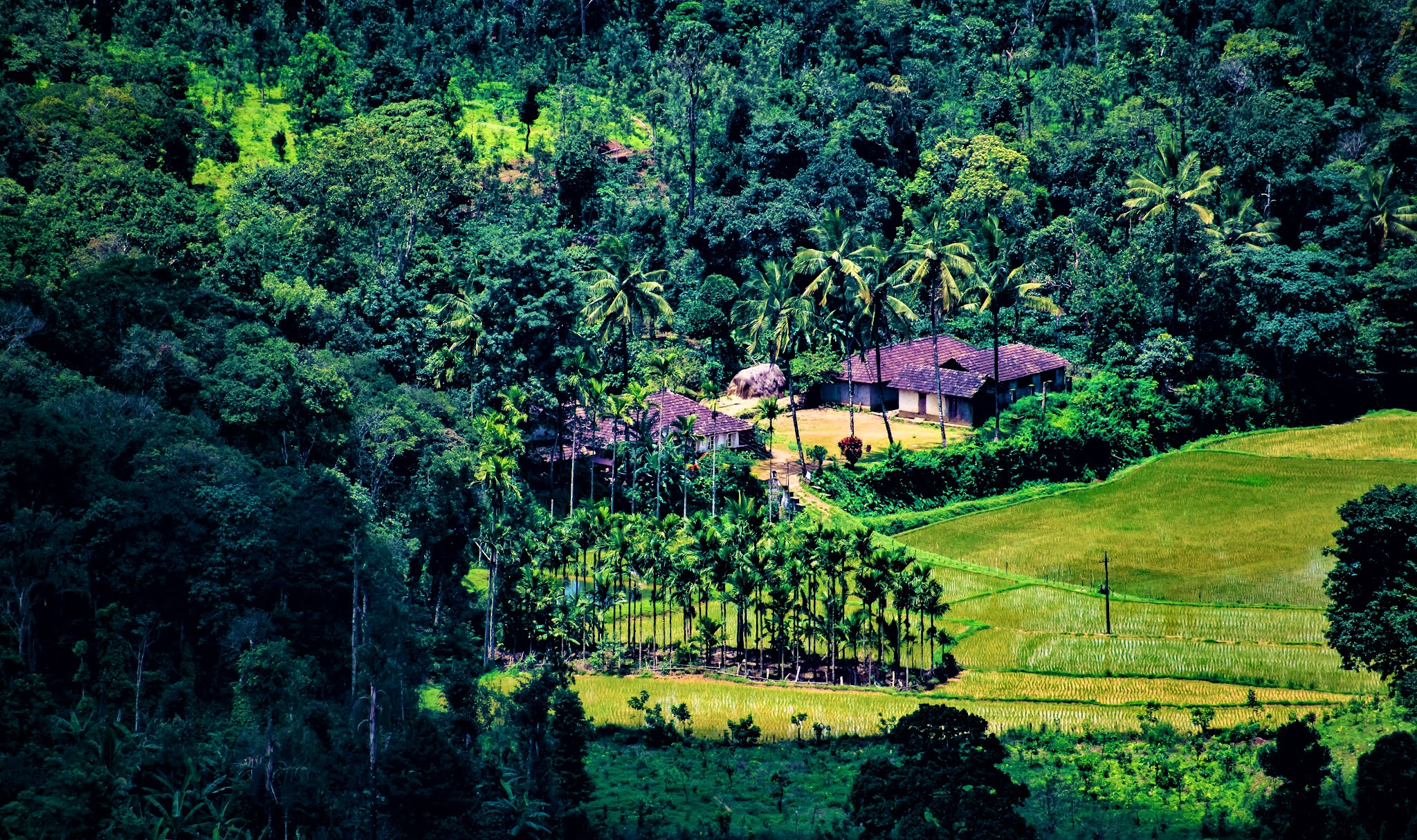 COORG: SCOTLAND OF INDIA