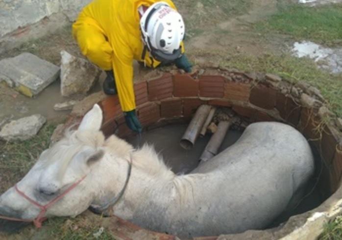 9° GBM resgata cavalo preso em bueiro no bairro Itaberaba em Juazeiro (BA) - Portal Spy Notícias de Juazeiro e Petrolina