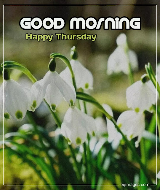 good morning happy thursday image with flowers