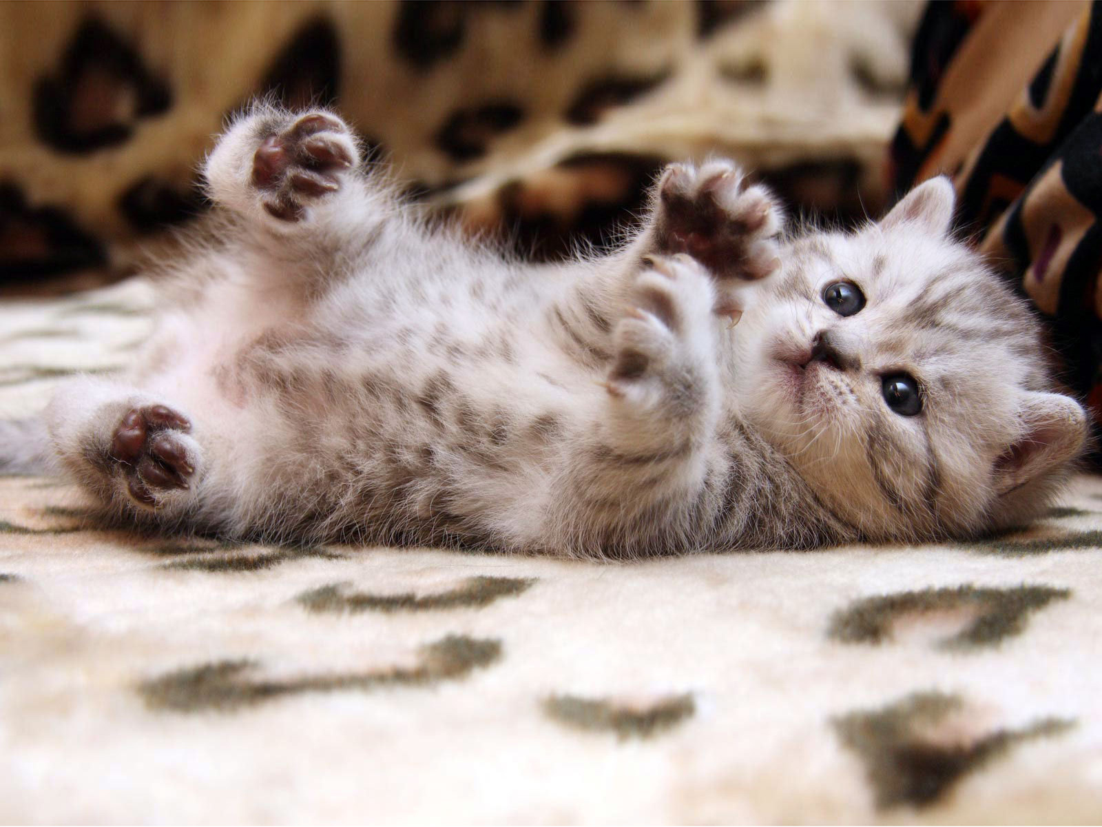 Cute cats hd wallpapers - Cute kittens hd images ...
