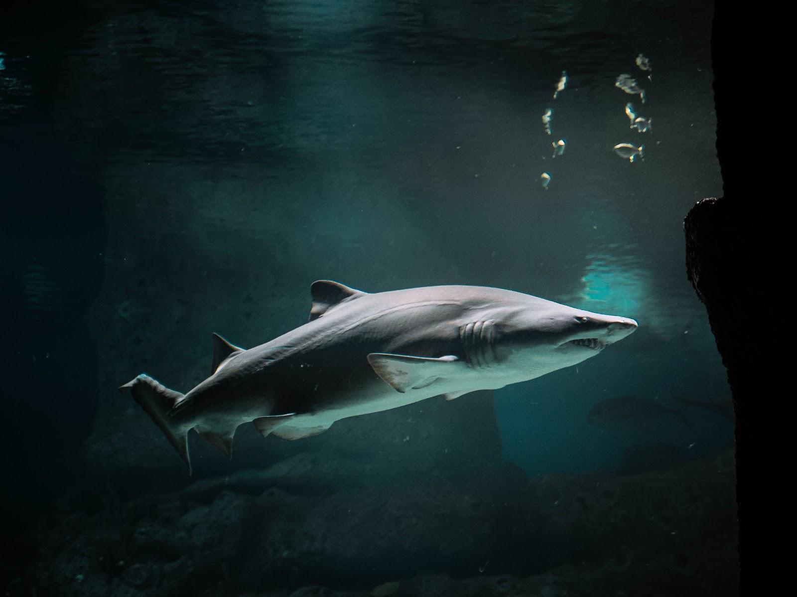 shark-underwater-pictures