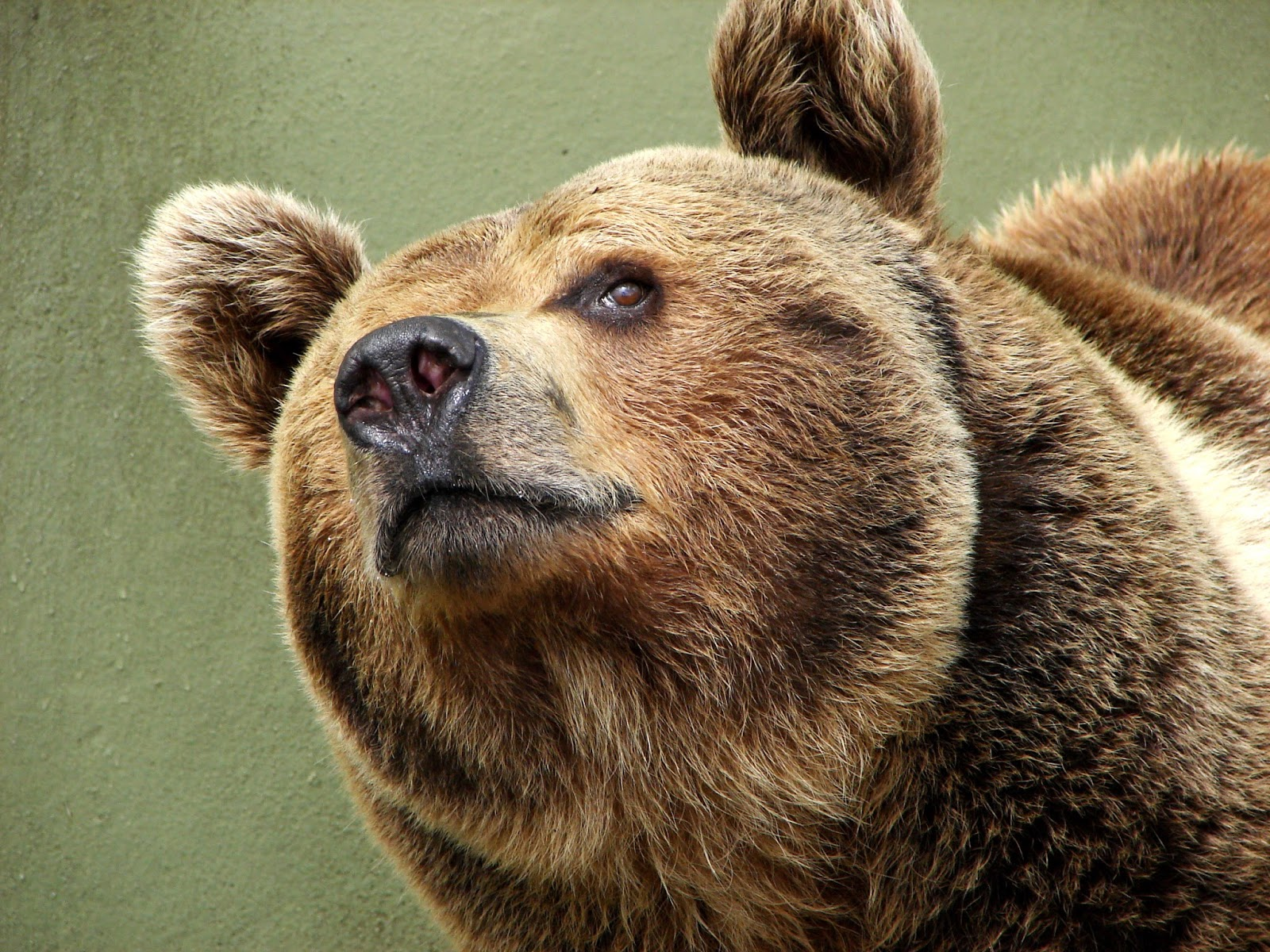 too two late bloomers fuzzy wuzzy is a bear