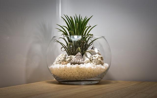 Cara Membuat Terarium Sendiri di Rumah