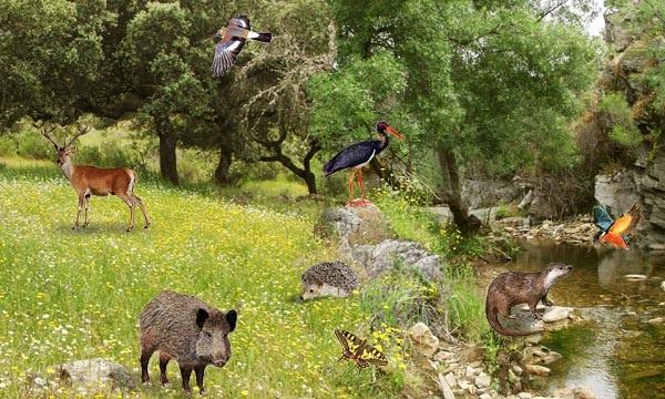 Paisajes Con Plantas Y Animales