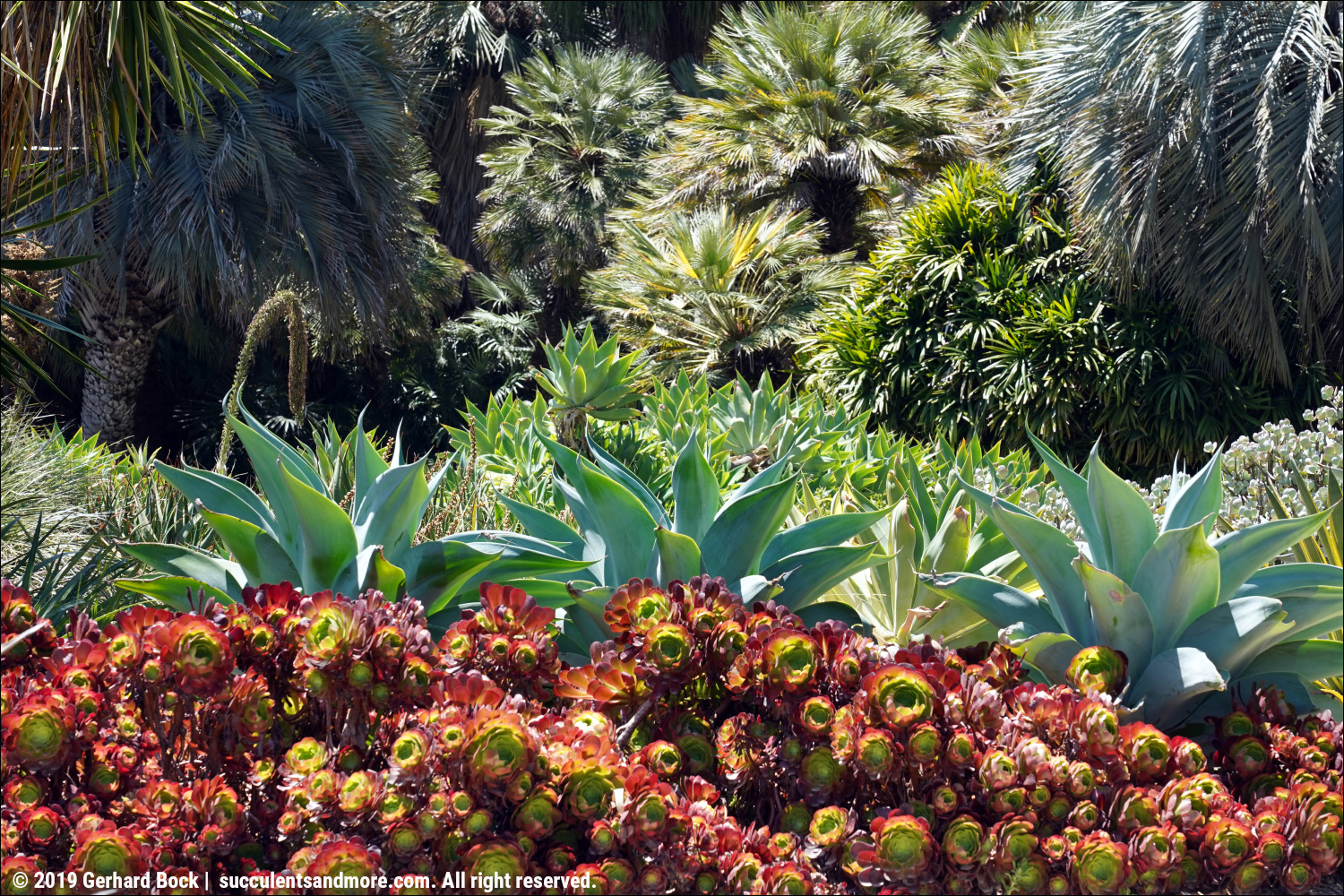 Succulents And More Huntington Botanical Gardens Much More Than