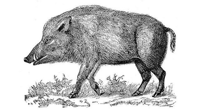 ngepet pig