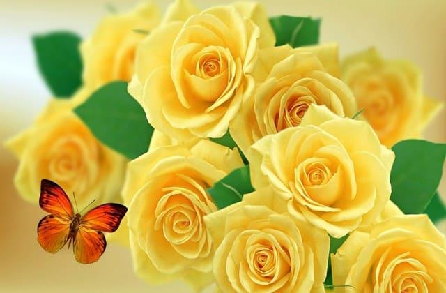 Mawar kuning menjadi simbol persahabatan, kasih ke teman paling cocok