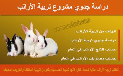 دراسة جدوي مشروع تربية الأرانب بالتفصيل