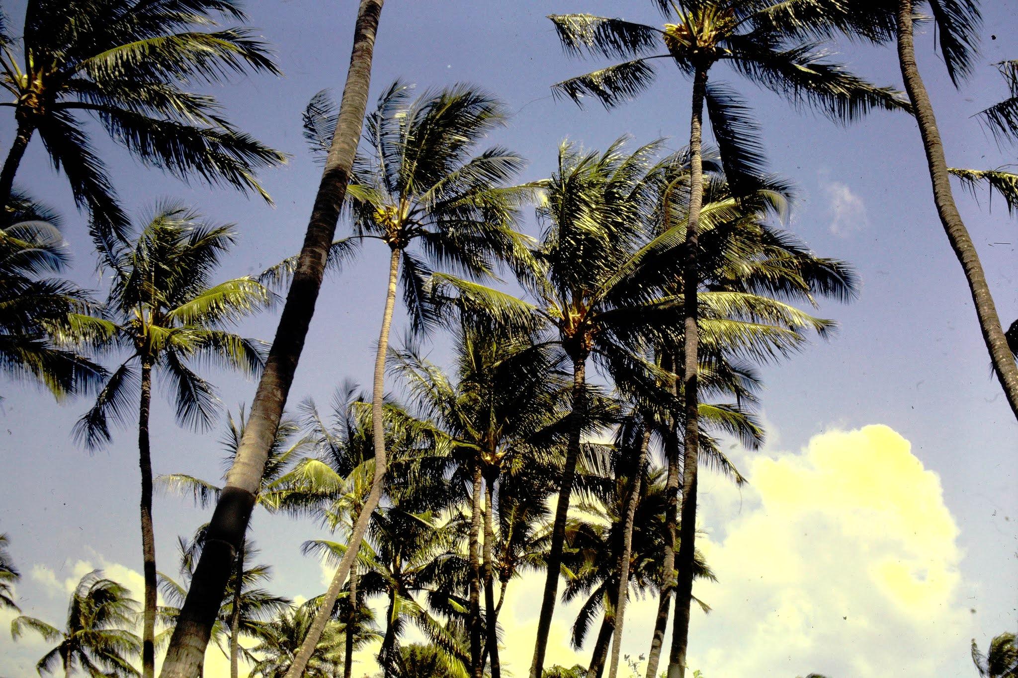 Palms Waikiki - 1961