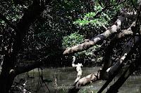 Habitat Hutan Mangrove Bali