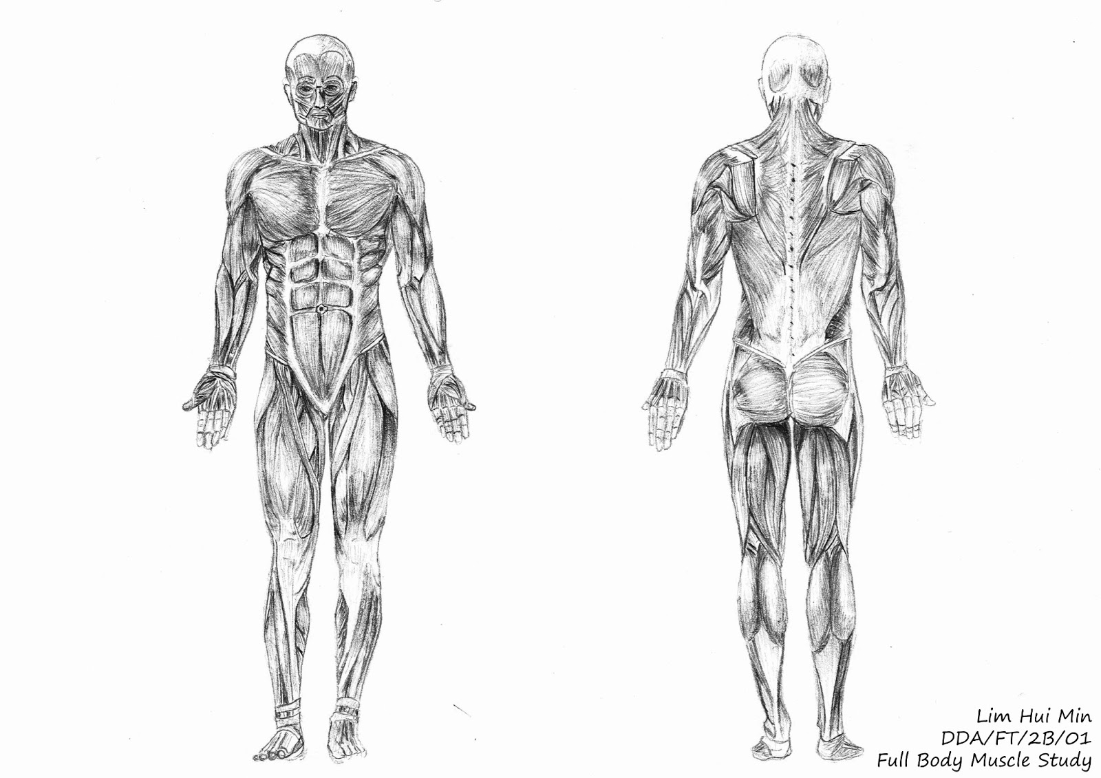 Figure Drawing Full Body Muscle Study