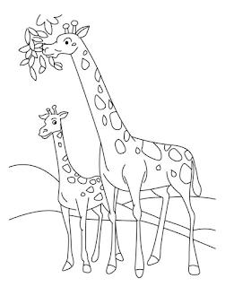 Adorable Baby Giraffe Familly Coloring Pages At Zoo
