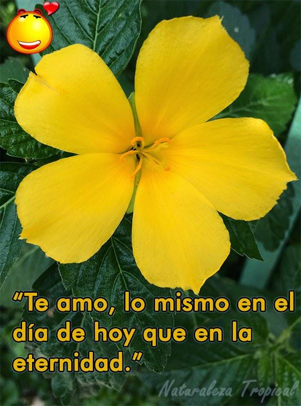 postal de amor con flor Marilopez