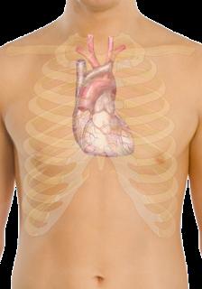 ह्रदय(दिल) के बारे में 23 रोचक तथ्य और जानकारी | Amazing Facts about Heart in Hindi