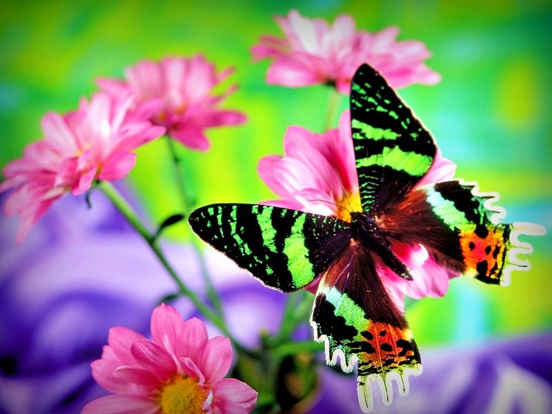 Gambar Rama Cantik Desainrumahid