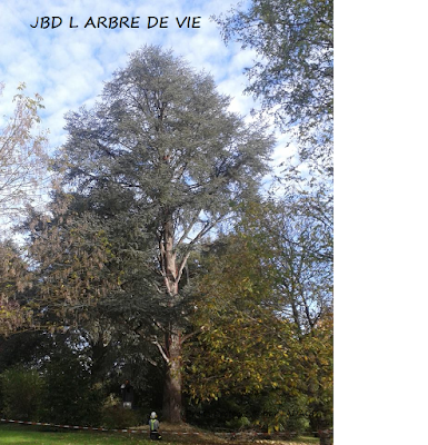 http://larbredeviejbd.blogspot.fr