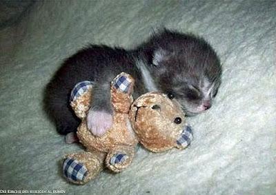 schlafende Tier Bilder - Katze kuschelt mit Kuscheltier