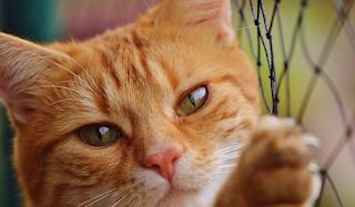 Αλμυρός Μαγνησίας: Πρόστιμο 30.000 ευρώ σε 65χρονο που κάρφωσε βέλος στην γατούλα της γειτόνισσας!