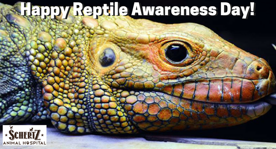 National Reptile Awareness Day Wishes Pics