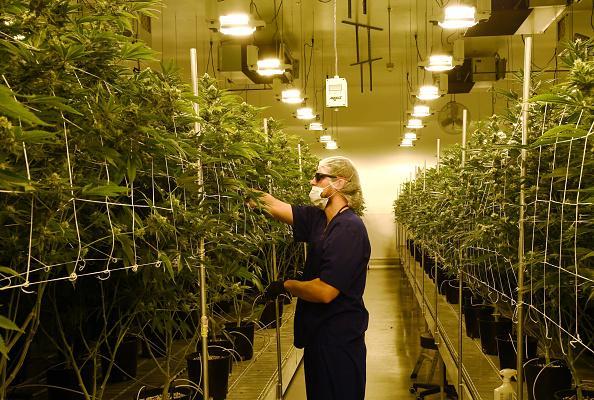 UK advised to recruit former drug dealers if marijuana is legalised