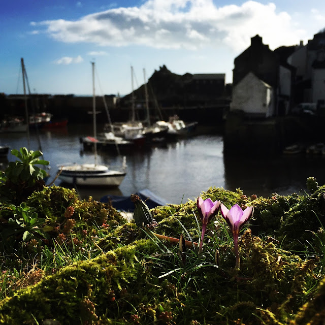 Spring Flowers in Polperro