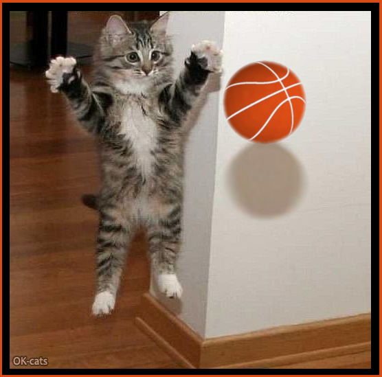 Photoshopped Cat picture • Funny kitten playing basketball like his human Weeee!