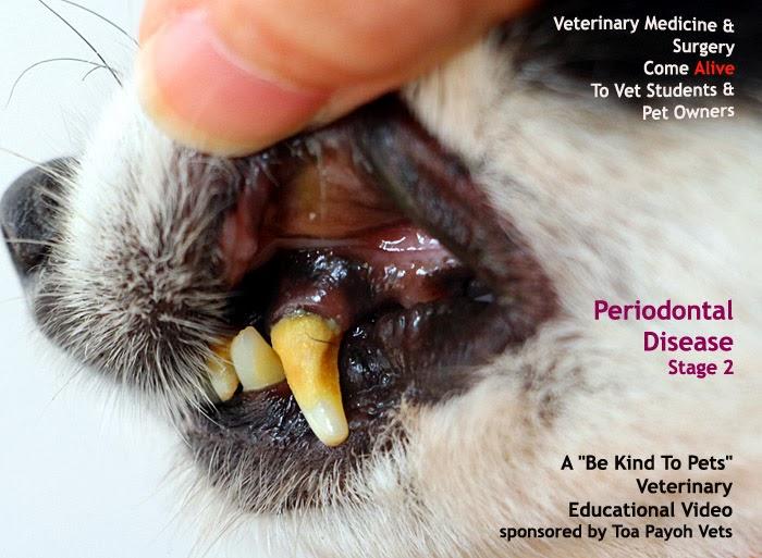 Periodontal Disease Grades Canine