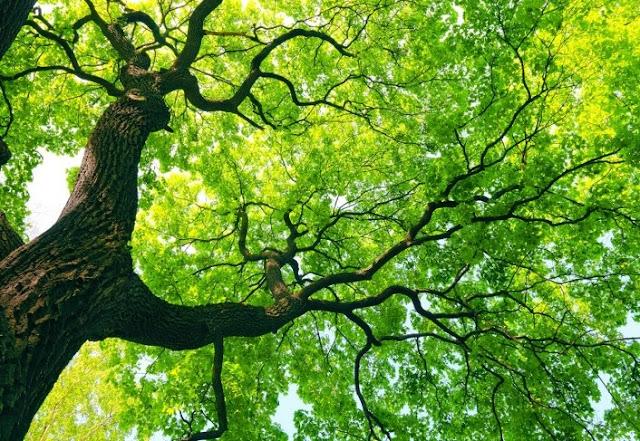 pemë në natyrë