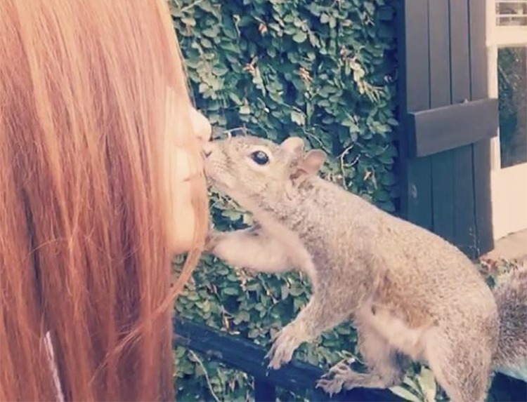 squirrel returns to the family who saved her 7 years a go