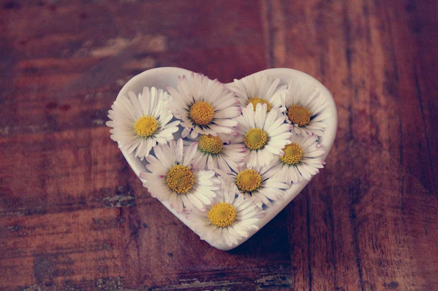 Companion Animal Psychology News September 2019; daisies in a heart