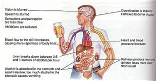 10 Lợi ích của Bia chúng ta nên biết 1