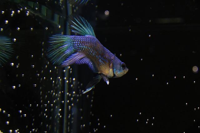 Asyiknya Memelihara Ikan Cupang