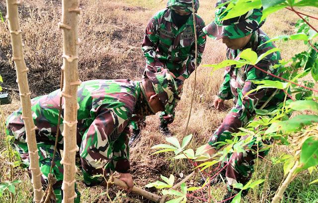 "BOJONEGORO, -  TNI Kodim 0813 Bojonegoro lakukan penanaman penghijauan di area lokasi Sentra Pelayanan Pertanian Padi Terpadu (SP3T), tepatnya di Desa Sumberarum, Kecamatan Dander, Bojonegoro, Jawa Timur, Senin (15/06/2020).     Kegiatan yang juga melibatkan puluhan anggota Pramuka Saka Wira Kartika (SWK) tersebut, dalam rangka gerakan menghijaukan kembali lahan yang kosong atau reboisasi guna memperbaiki kualitas udara serta mengurangi dampak dari pemanasan global.     Pasiter Kodim 0813 Bojonegoro, Kapten Inf Surahmad menuturkan, gerakan penghijauan ini sangat penting karena banyak sekali manfaatnya, diantaranya adalah dapat memperbaiki kualitas udara.     ""Oksigen yang dihasilkan dari pohon-pohon tersebut bisa menyerap karbondioksida disekitar lingkungan kita. Sehingga, secara otomatis akan memperbaiki kondisi udara,"" ungkapnya.     Selain melakukan penanaman pohon di area SP3T, pihaknya bersama Koramil jajaran Kodim 0813 Bojonegoro juga menyiapkan lahan kosong diseputaran perkantoran Korami-Koramil jajaran, yang nantinya akan dimanfaatkan untuk penanaman tanaman hortikultura dalam rangka mendukung program Ketahanan Pangan (Han Pangan).     ""Penanaman pohon ini sangat tepat, karena nantinya pohon ini dapat membantu mencegah terjadinya bencana alam seperti banjir dan tanah longsor. Kodim bersama Koramil-Koramil jajaran juga siap mendukung program Han Pangan, dengan memanfaatkan lahan kosong untuk ditanami tanaman holtikultura dan sayuran,"" pungkas Kapten Inf Surahmat.(Jayak)"